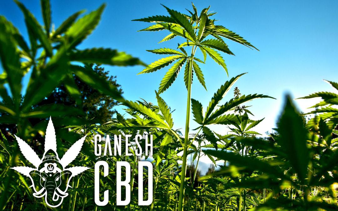 Cannabis nelle tabaccherie?