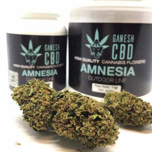 amnesia ganesh