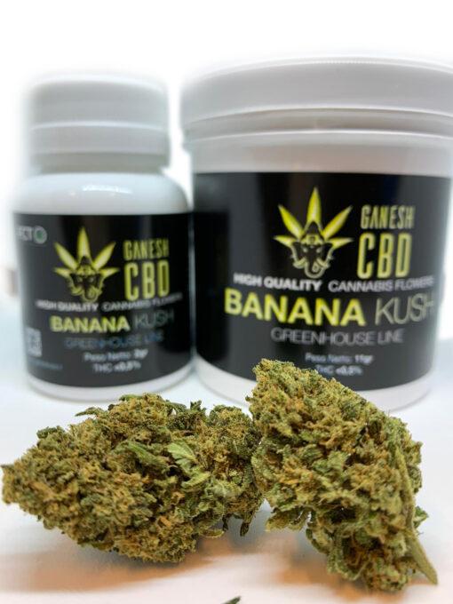 banana kush ganesh cbd cannabis legale