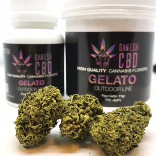 ganesh cbd gelato erba legale marijuana legale cannabis legale