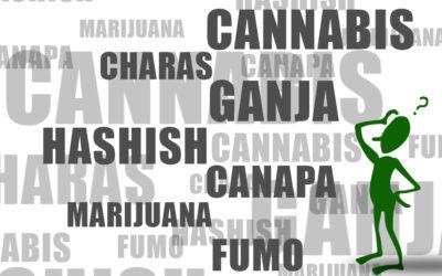 Ganja, marijuana, hashish, charas, canapa, cannabis, cosa sono?