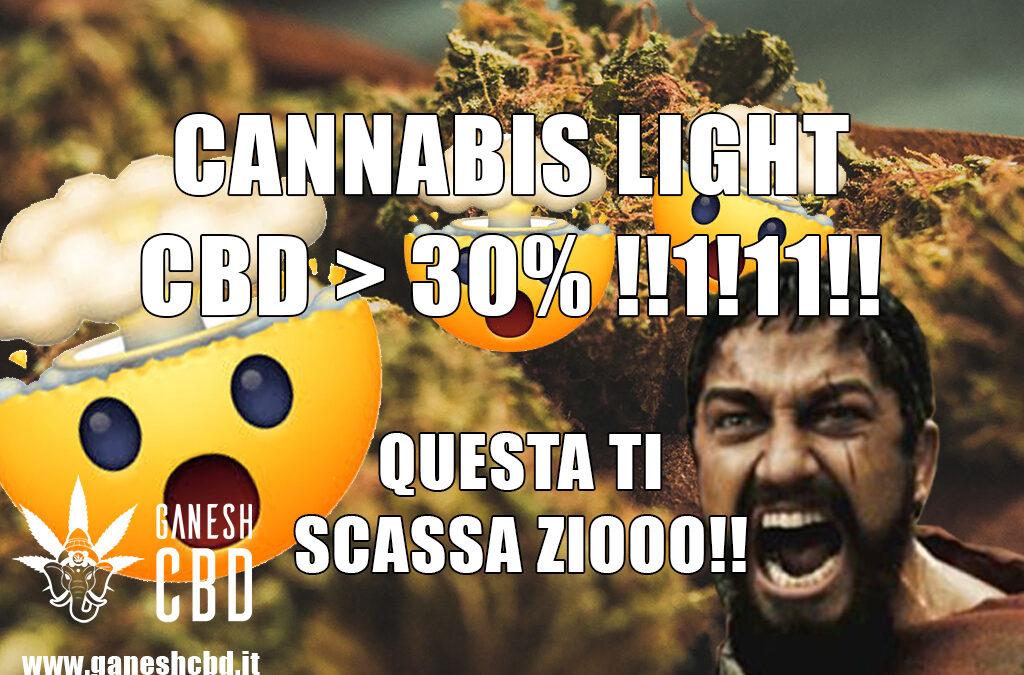 Cannabis light con CBD>20%? Non fatevi fregare