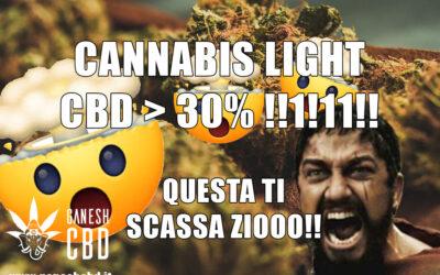 Cannabis light con CBD 20%? Non fatevi fregare