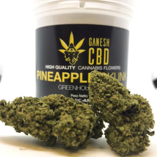 pineapple skunk cannabis legale a domicilio erba legale marijuana legale cannabis light