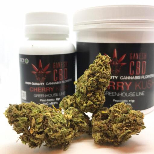 cherry kush ganesh cbd cannabis legale