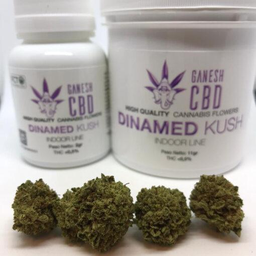 dinafem miglior cannabis legale in italia dinamed kush cannabis legale cbd ganesh marijuana legale indoor
