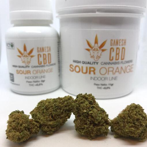 sour orange dinafem miglior cannabis legale in italia cannabis legale cbd ganesh marijuana legale indoor