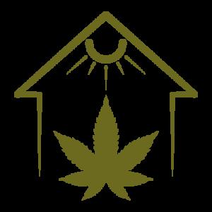 coltivazione indoor cannabis ganesh cbd erba marijuana