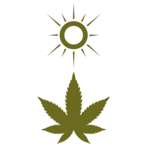 coltivazione outdoor cannabis ganesh cbd erba marijuana